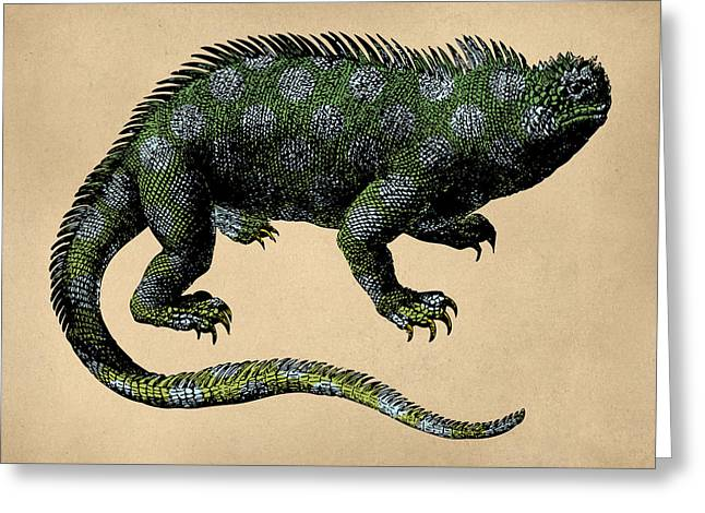Fantasy Iguana Vintage Illustration Greeting Card by Flo Karp