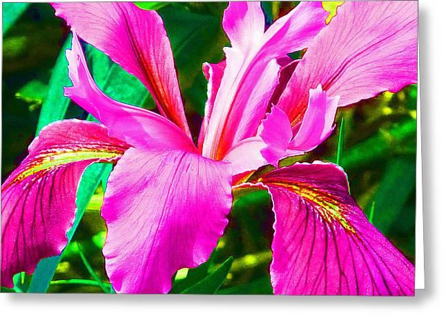 Fantasy Iris Greeting Card by Margaret Saheed