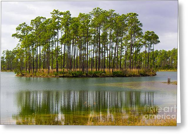 Gold Trout Greeting Cards - Fantasy Island in the Florida Everglades Greeting Card by Rene Triay Photography