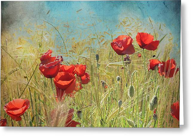 Poppy Photo Greeting Cards - Fantasy poppies Greeting Card by Guido Montanes Castillo