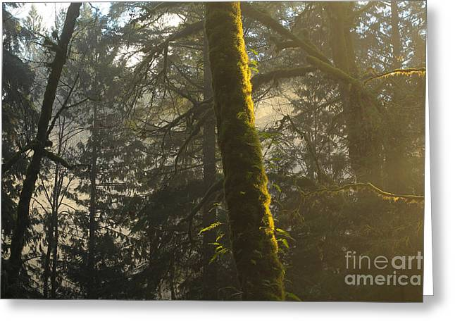 Moss Greeting Cards - Fantasy Woods Greeting Card by Jason Gallant