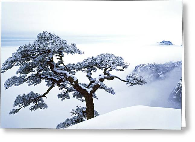 Fare-well Pine Tree Greeting Card by King Wu