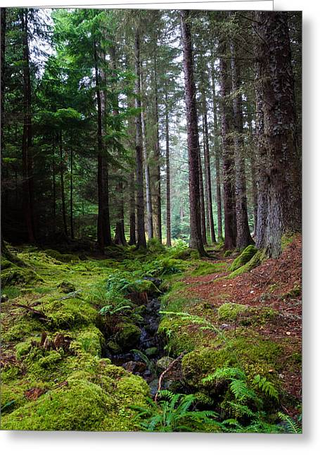 Forestry Commission Greeting Cards - Farigaig Forest Greeting Card by Chris Dale