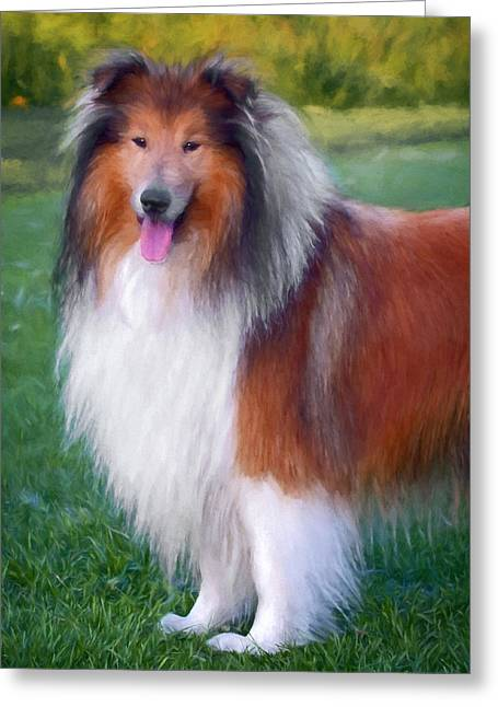 Collie Greeting Cards - Farm Collie Greeting Card by Daniel Hagerman