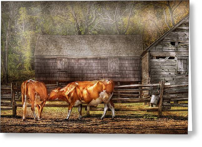 Chubby Greeting Cards - Farm - Cow - A couple of Cows Greeting Card by Mike Savad