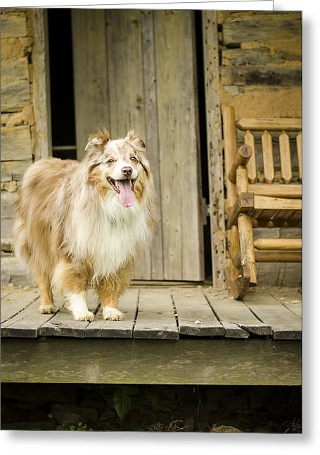 Hanging Out Greeting Cards - Farm Dog Greeting Card by Heather Applegate
