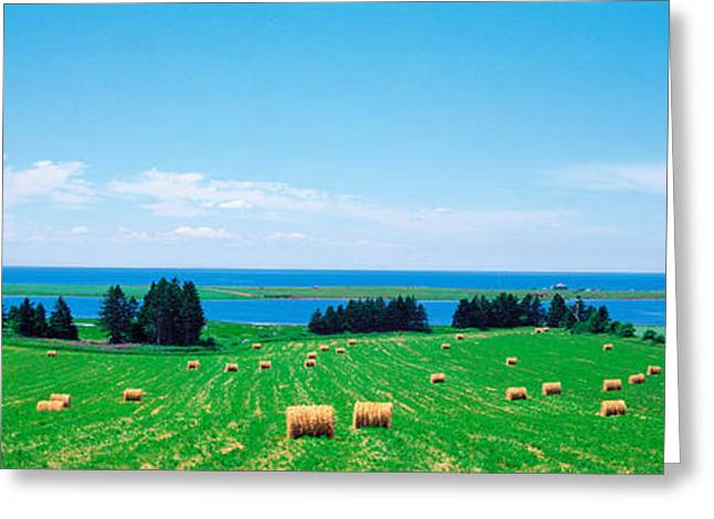 Princes Greeting Cards - Farm Field Prince Isl Canada Greeting Card by Panoramic Images