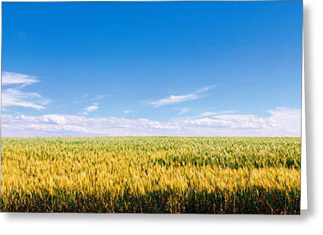 Golden Summer Grass Greeting Cards - Farm Field Twin Falls Id Usa Greeting Card by Panoramic Images