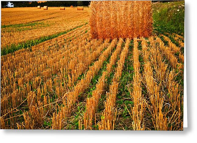 Farm field with hay bales at sunset in Ontario Greeting Card by Elena Elisseeva