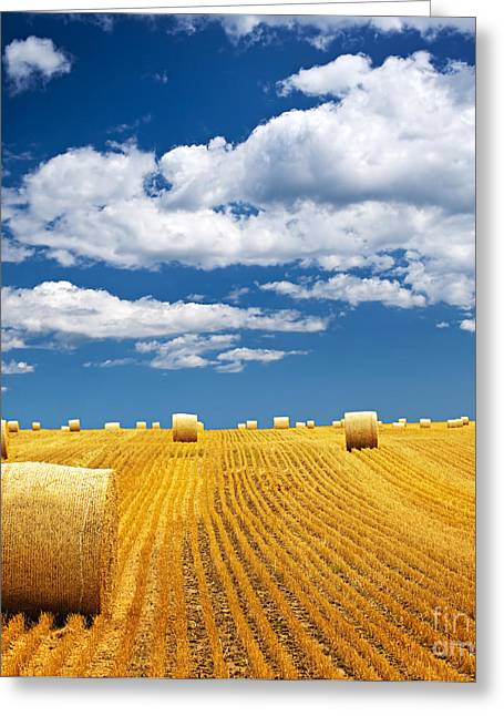 Hay Bales Photographs Greeting Cards - Farm field with hay bales Greeting Card by Elena Elisseeva