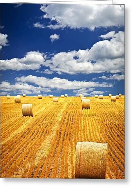 Grain Greeting Cards - Farm field with hay bales in Saskatchewan Greeting Card by Elena Elisseeva