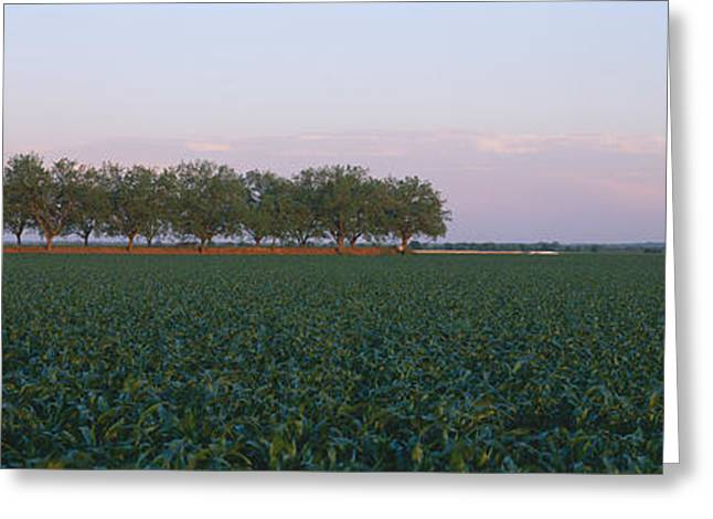 Plantlife Greeting Cards - Farm Fields Outside Of San Antonio Greeting Card by Panoramic Images