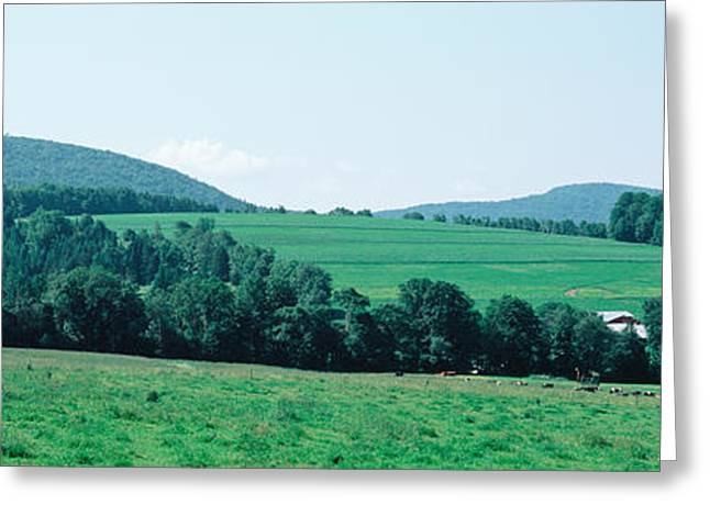 Pasture Scenes Greeting Cards - Farm In A Field, Danville, Vermont, Usa Greeting Card by Panoramic Images