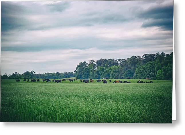 Alabama Greeting Cards - Farm in Alabama Greeting Card by Mountain Dreams