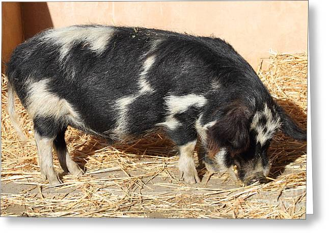 Farm Pig 7D27356 Greeting Card by Wingsdomain Art and Photography