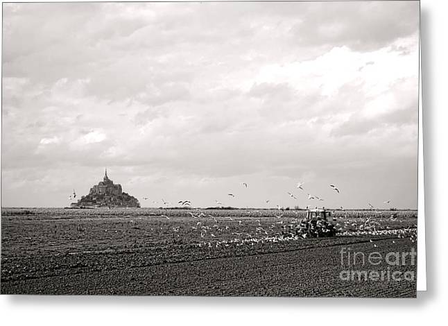 Flying Seagulls Greeting Cards - Farm Work at Mont Saint Michel Greeting Card by Olivier Le Queinec