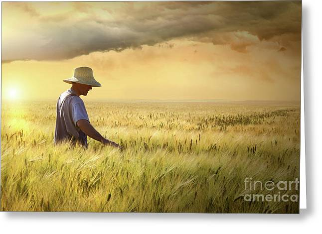 Overalls Greeting Cards - Farmer checking his crop of wheat  Greeting Card by Sandra Cunningham