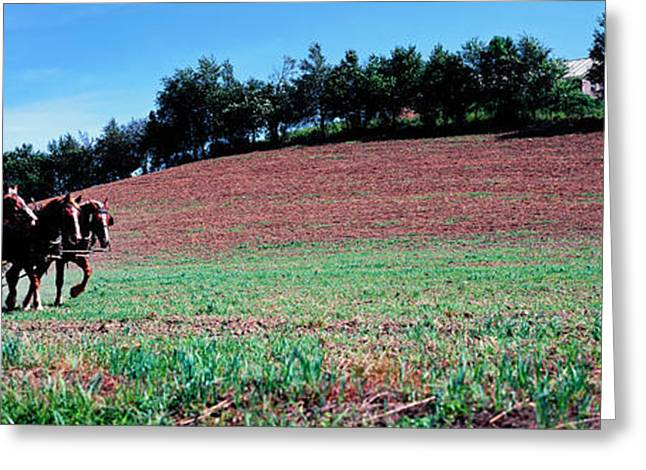Farmer Plowing Field With Horses, Amish Greeting Card by Panoramic Images