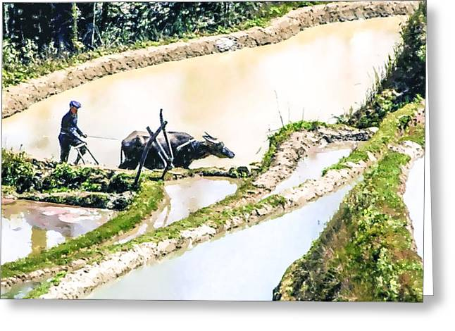 Nature Greeting Cards - Farmer plowing terraced rice fields Greeting Card by Lanjee Chee