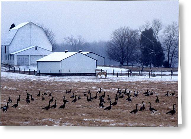 Flock Of Geese Greeting Cards - Farmers Christmas Greeting Card by Skip Willits