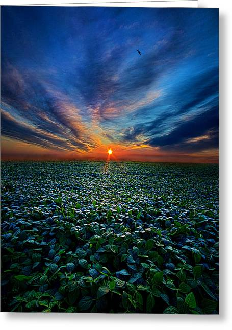 Shadows Greeting Cards - Farmers Delight Greeting Card by Phil Koch