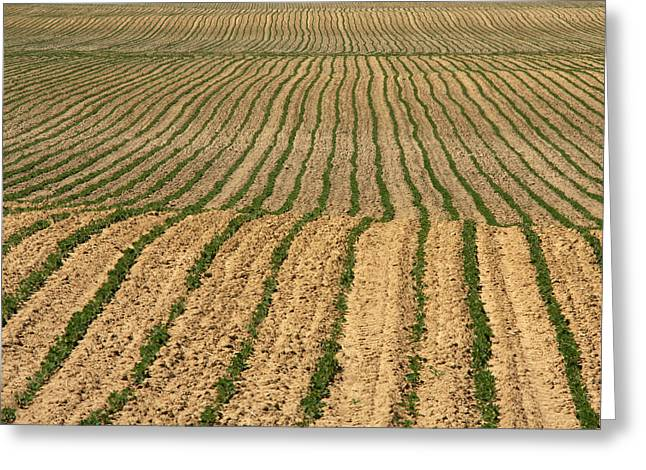 Jim Nelson Greeting Cards - Farmers Field Greeting Card by Jim Nelson