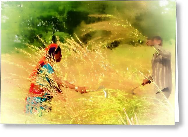 Testament Greeting Cards - Farmers Fields Harvest India Rajasthan 1a Greeting Card by Sue Jacobi