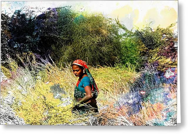 Farmers Field Greeting Cards - Farmers Fields Harvest India Rajasthan 2c Greeting Card by Sue Jacobi