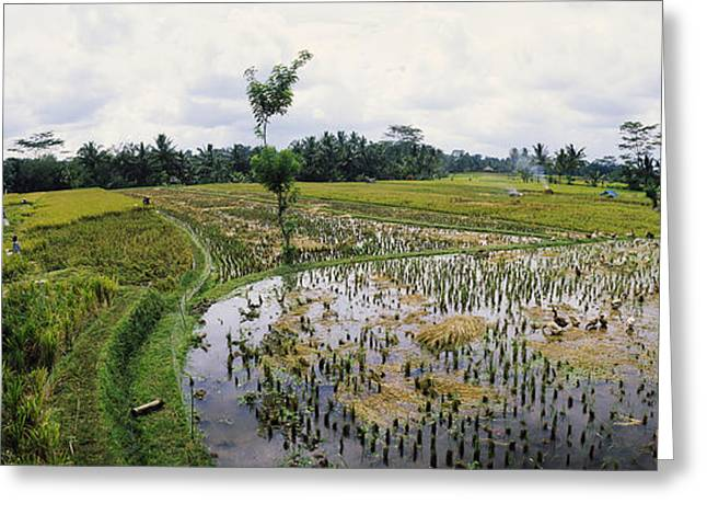 Farmers Working In A Rice Field, Bali Greeting Card by Panoramic Images
