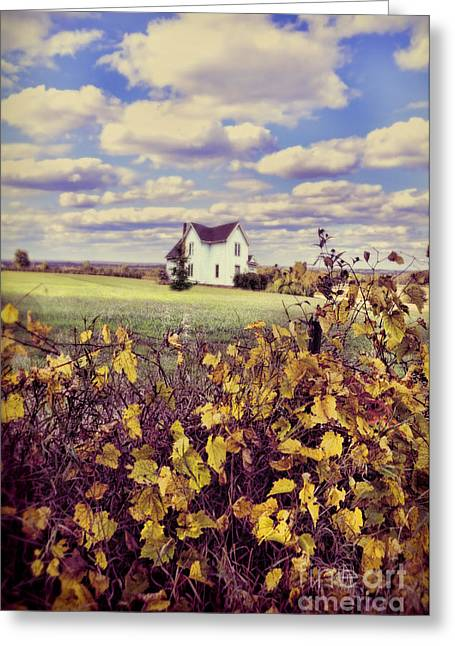 Grapevines Greeting Cards - Farmhouse and Grapevines Greeting Card by Jill Battaglia