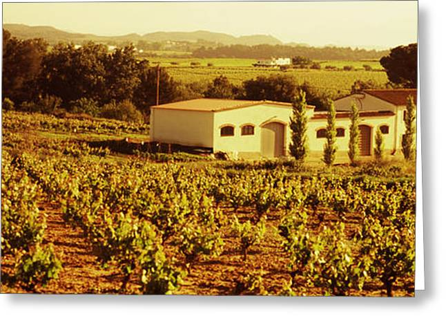 Farmhouses In A Vineyard, Penedes Greeting Card by Panoramic Images