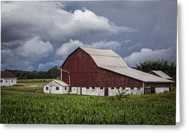 Amish Greeting Cards - Farming Greeting Card by Debra and Dave Vanderlaan