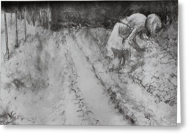 Picking Drawings Greeting Cards - Farming in Basking Ridge Greeting Card by Dorothy Siclare