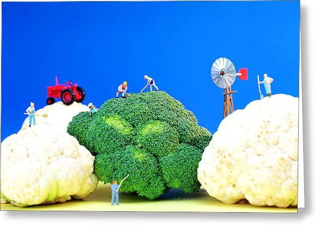 Farmers Field Greeting Cards - Farming on broccoli and cauliflower Greeting Card by Paul Ge