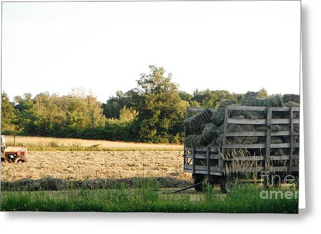 Esem8chart.com Greeting Cards - Farming Greeting Card by Sarah Holenstein
