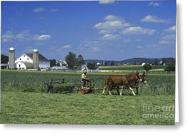 Amish Greeting Cards - Farming the Old Order way Greeting Card by Paul W Faust -  Impressions of Light