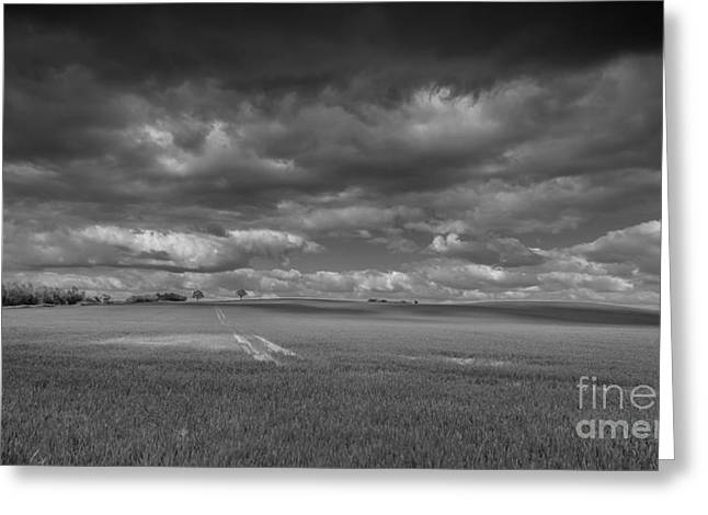 Monochrome Greeting Cards - Farmland in monochrome Greeting Card by Chris Fletcher