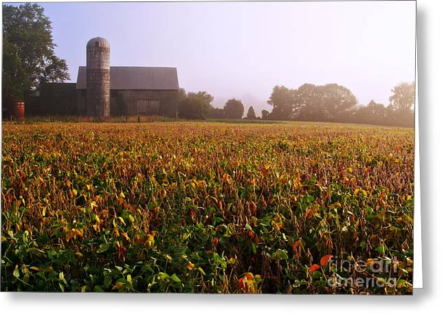 Diffusion Greeting Cards - Farmland Greeting Card by Olivier Le Queinec
