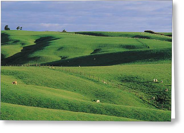 Separate Greeting Cards - Farmland Southland New Zealand Greeting Card by Panoramic Images