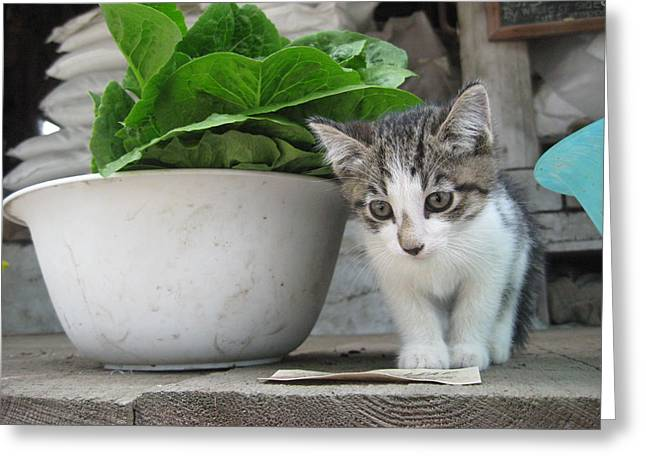 Farmstand Kitten Greeting Card by Kim Kornbacher