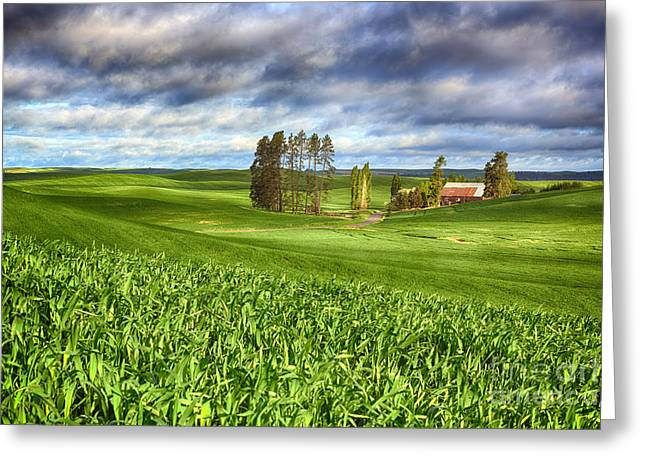 Farmstead Greeting Card by Beve Brown-Clark Photography
