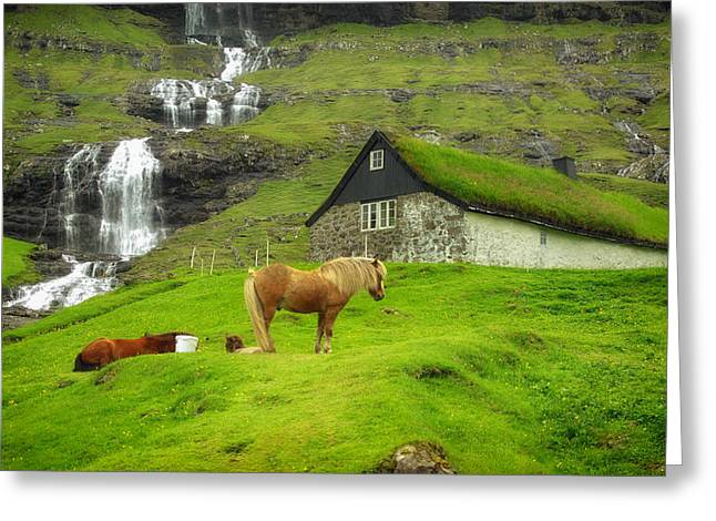 Thatch Greeting Cards - Faroe Islands Rural Scene Greeting Card by Mountain Dreams