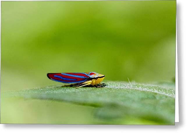 Fashion Bug - Leafhopper Greeting Card by  Andrea Lazar
