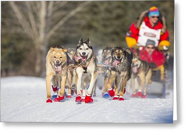 Dog Sled Racing Greeting Cards - Fast and Flashy Greeting Card by Tim Grams