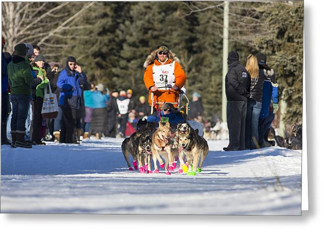 Dog Sled Racing Greeting Cards - Fast Booties Greeting Card by Tim Grams