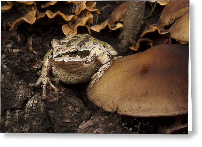 Fungal Greeting Cards - Fat Frog Greeting Card by Jean Noren
