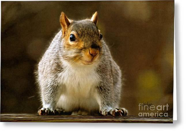 Squirrel Digital Greeting Cards - Fat N Sassy Smile Greeting Card by Lois Bryan