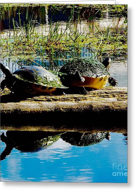 Forida Greeting Cards - Fat Turtles Greeting Card by Caroline Gilmore