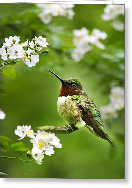 Ruby Throated Hummingbird Greeting Cards - Fauna and Flora - Hummingbird with Flowers Greeting Card by Christina Rollo