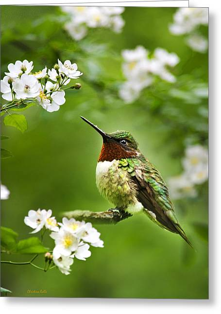 Birds With Flowers Greeting Cards - Fauna and Flora - Hummingbird with Flowers Greeting Card by Christina Rollo